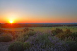 Blue Bonnet Sunset