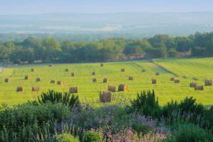 Fredericksburg Pasture